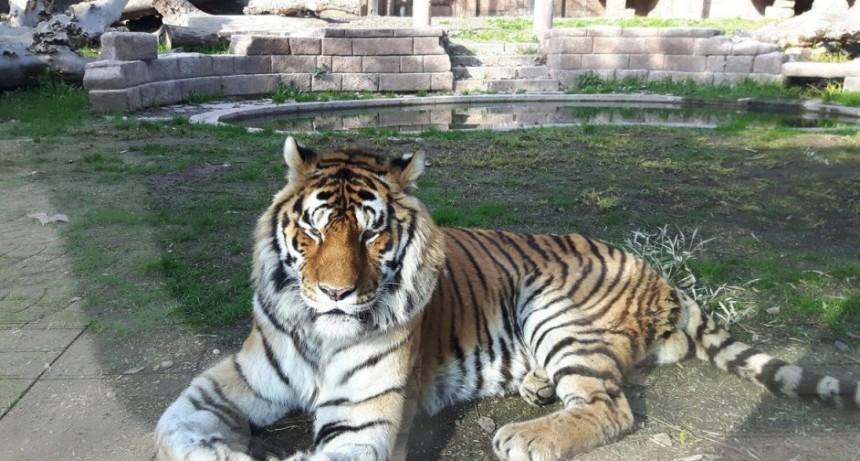 Juntan alimentos para los animales del zoo de Córdoba