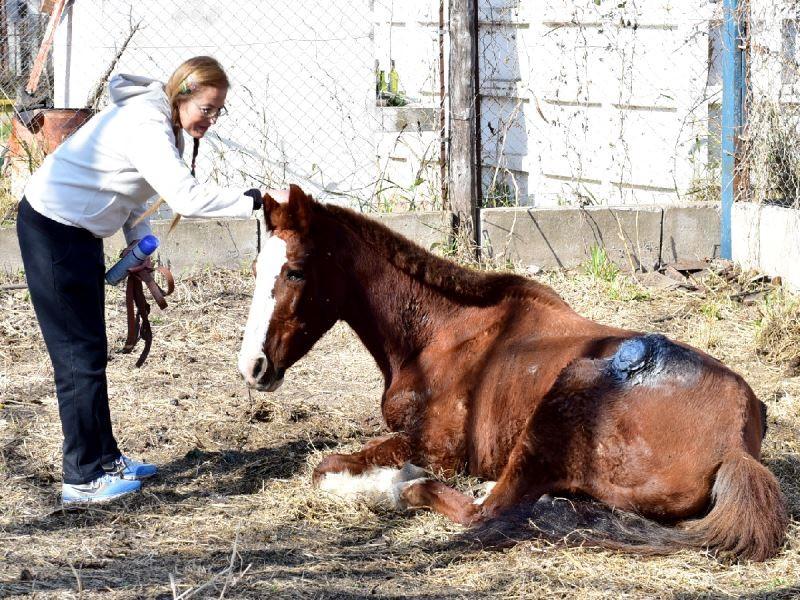 Destinarán un lote municipal para refugiar caballos rescatados del maltrato animal