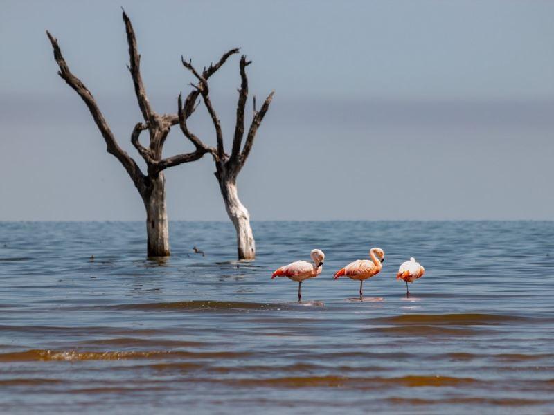 La provincia cedió las tierras y Ansenuza será Parque Nacional